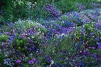 France, Domaine de Chaumont-sur-Loire, massif de plantes annuelles dans le parc du château