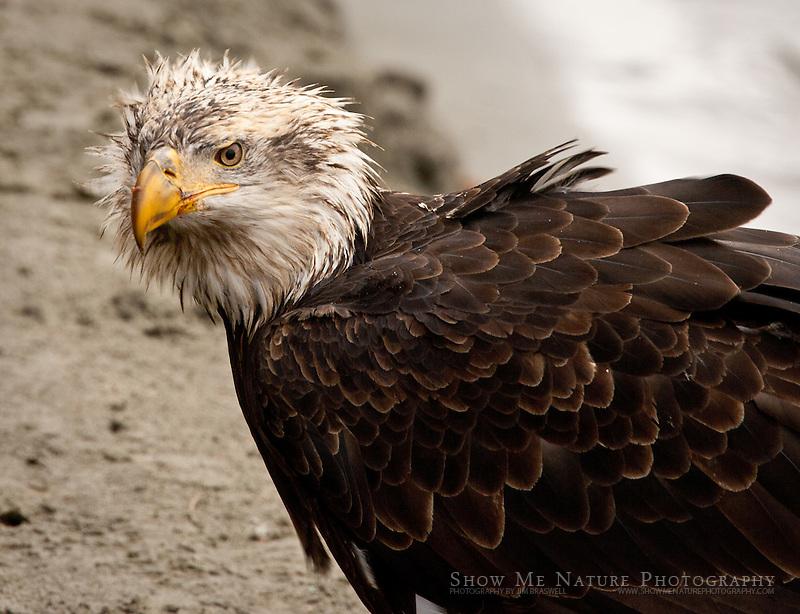 """Bad Hair Day"", Alaska"