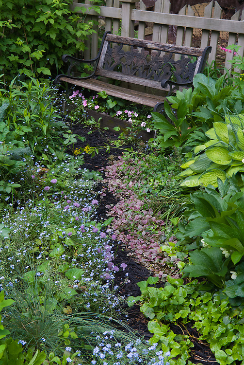 Garden bench in spring, hosta perennials, hellebores, forget me nots myosotis in blue flowers, chives in bloom, Dicentra spectabilis, picket fence, mulched pathway, ajuga and ivy groundcovers, runner box container planter under bench with pink impatiens, pink and blue and green colors