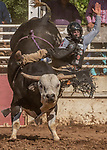 Bull Rider Aaron Williams from Pismo Beach, California scores 71.0 at the 62nd annual Mother Lode Round-up on Sunday, May 12, 2019 in Sonora, California.  Photo by Al Golub