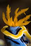 Nudibranchs & Mollusks
