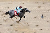 LOUISVILLE, KY - MAY 05: Bird Song #1, ridden by Julien Leparoux, wins the Alysheba Stakes as a bird flies above on Kentucky Oaks Day at Churchill Downs on May 5, 2017 in Louisville, Kentucky. (Photo by Jon Durr/Eclipse Sportswire/Getty Images)