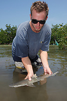 qa70656-D. marine biologist Tristan Guttridge (model released) from Bimini Biological Field Station, with young Lemon Shark (Negaprion brevirostris) he has just tagged. Bahamas, Atlantic Ocean..Photo Copyright © Brandon Cole. All rights reserved worldwide.  www.brandoncole.com..This photo is NOT free. It is NOT in the public domain. This photo is a Copyrighted Work, registered with the US Copyright Office. .Rights to reproduction of photograph granted only upon payment in full of agreed upon licensing fee. Any use of this photo prior to such payment is an infringement of copyright and punishable by fines up to  $150,000 USD...Brandon Cole.MARINE PHOTOGRAPHY.http://www.brandoncole.com.email: brandoncole@msn.com.4917 N. Boeing Rd..Spokane Valley, WA  99206  USA.tel: 509-535-3489