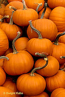 HS24-102d  Pumpkin - harvested - Baby Bear variety