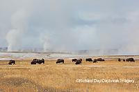 01985-02715 Bison (Bison bison) near Midway Geyser Basin Yellowstone National Park, WY
