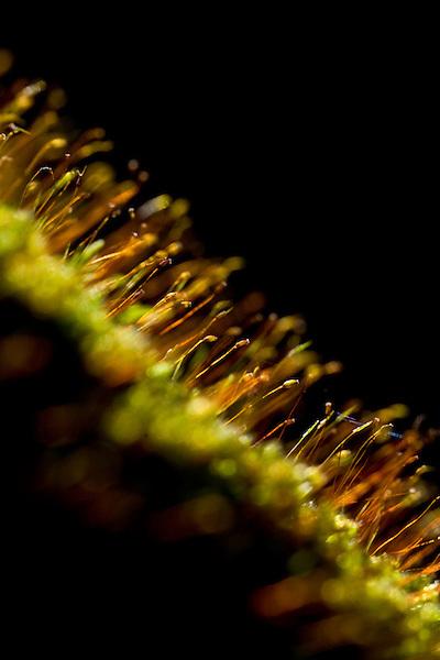Pocos de Caldas_MG, Brasil...Plano de manejo das Reserva Particular do Patrimonio Natural (RPPN) em Pocos de Caldas, Minas Gerais. Na foto uma planta...The Private Natural Heritage Reserve (RPPN) in Pocos de Caldas, Minas Gerais.In this photo a plant...Foto: JOAO MARCOS ROSA /  NITRO