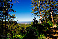 Image Ref: YV188<br /> Location: Toolangi State Forest<br /> Date: 03 Jan 2015