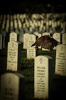 Flying Through the Graveyard