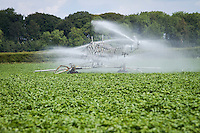 Irrigating potatoes with 72m boom in June