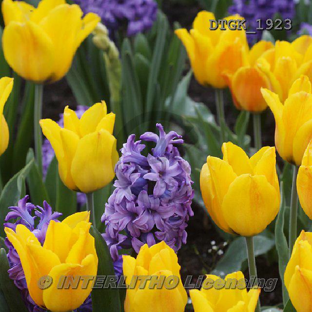 Gisela, FLOWERS, BLUMEN, FLORES, photos+++++,DTGK1923,#f#
