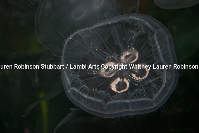 2007 Copyright  Whitney Lauren Robinson Stubbart / Lambi Arts Photography Animals Wildlife