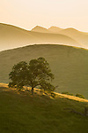 Rolling hills with oaks at sundown in Yokohl Valley in the Sierra Nevada Foothills, Tulare County, Calif.