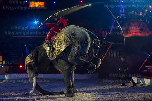 Elephant trained by Rene Caselly performs a rope jumping trick during the premiere of the new show titled Lights of the Universe in Budapest, Hungary on October 05, 2013. ATTILA VOLGYI