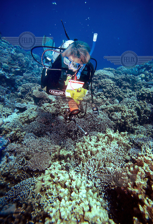 Marine biologist Carden Wallace from Museum of Tropical Queensland examine corals on Great Barrier Reef in 2001.<br /> <br /> In 1998 scientists began warning about rising sea temperature, coral bleaching and global warming. In March 2016 reports emerged that swhowed 95% of reefs from Cairns to Papua New Guinea were now severely bleached, and already reporting up to 50% mortality of bleached corals.