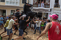 "Spain. Balearic Islands. Minorca (Menorca). Mahon. Rising horse at  ""Festes de la Mare de Déu de Gràcia"" during the traditional summer festival. The Menorquín is a breed of horse indigenous to the island and is closely associated with the doma menorquina style of riding. The riders wear black and white and most of their horses (adorned with ribbons and multi-coloured rosettes) are of the highly-considered Menorcan breed. The riders and their horses parade through the streets, and these magnificent and remarkably calm horses rear up on their hind-legs to the delight of the crowd. The most valued quality of Menorquín horse is its suitability for the traditional festivals of Menorca. Horses and riders are at the centre of local fiesta celebrations, in a tradition that may go back to the 14th century and incorporate elements of Christian, pagan and Moorish ritual. Some 150 riders participate in the festival in Mahón. Riders pass through the crowds, executing caracoles and repeatedly performing the bot. The aim of the 'bot' is for the horse to stand on its hind legs while keeping its head and shoulders relaxed and without tension; the more often it is performed and the greater the distance travelled, the greater the applause of the crowd. The elevade, in which the horse beats the air with the front hooves, is also a part of the ritual of the fiesta. Touching the horses is believed to bring good luck. Maó, written in English as Mahon, is a municipality, the capital city of the island of Menorca, and seat of the Island Council of Menorca. The city is located on the eastern coast of the island, which is part of the autonomous community of the Balearic. In Spain, an autonomous community is a first-level political and administrative division, created in accordance with the Spanish constitution of 1978, with the aim of guaranteeing limited autonomy of the nationalities and regions that make up Spain. 8.09.2019 © 2019 Didier Ruef"