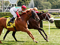 Holiday Stone (no. 2) wins Race 4, Sep. 1, 2018 at the Saratoga Race Course, Saratoga Springs, NY.  Ridden by Luis Saez and trained by George Weaver, Holiday Stone  finished a head in front of Night Prowler (no. 4).  (Bruce Dudek/Eclipse Sportswire)