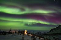 The colorful aurora borealis swirls over the caribou bluff cabin in the White Mountains National Recreation Area, Interior, Alaska.
