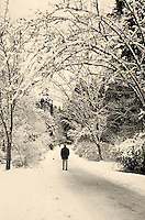Man walking through arbor of snow-covered arching trees on path in Stanley Park, winter, Vancouver, BC.