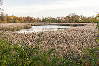 The Ridgewood Reservoir in Highland Park in Brooklyn in New York on Saturday, November 5, 2016. Formerly the water supply for much of Brooklyn, it was completely decommissioned in 1990. The three basins were drained with one remaining as a wetlands and the other two allowed to naturally develop into forests. It sits atop the Harbor Hill Moraine.  (© Richard B. Levine)