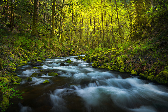 The cascading waters of Gorton Creek flow gently around this curve while the late afternoon light glows in the distance.<br />
