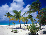 Barbuda, West Indies<br /> Yucca and scattered palm trees on the white sand beach at Coco Point - caribbean Leeward Islands