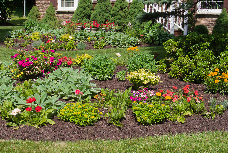 Mulched garden flowers  with lawn grass, circular garden bed, annuals, house