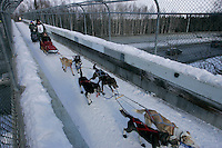 Lachlan Clarke crosses on a bridge over Northern Lights blvd in Anchorage on Saturday March 1st during the ceremonial start day of the 2008 Iidtarod Sled Dog Race.
