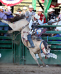 Caine Riddle competes in the bareback bronc riding event at the Reno Rodeo in Reno, Nev., on Friday, June 20, 2014.<br />