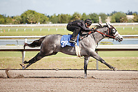 #39.Fasig-Tipton Florida Sale,Under Tack Show. Palm Meadows Florida 03-23-2012 Arron Haggart/Eclipse Sportswire.