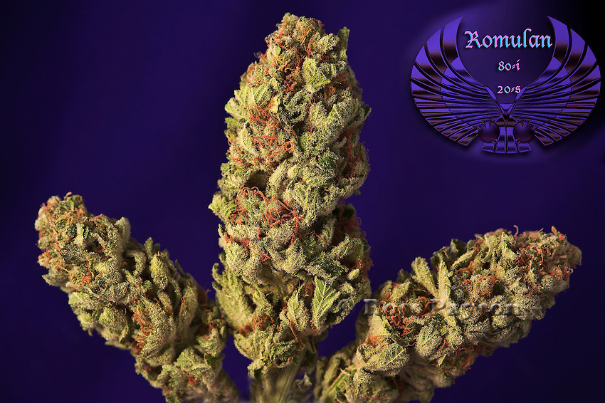Romulan nug photo shot in a professional photography studio