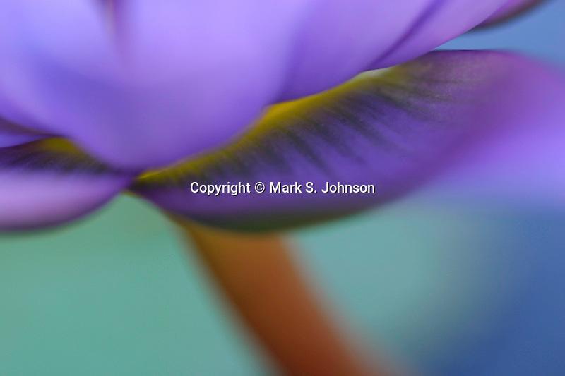 kauian purple lily pad flower