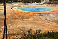 Colorful bacterial Mats provide a vivid accent to Grand Prismatic Spring in the Midway Geyser Basin of Yellowstone National Park.