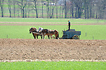 Amishman and horse team spreading manure. Early Spring.