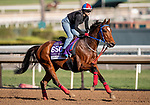 OCT 29: Breeders' Cup Dirt Mile entrant Ambassadorial, trained by Jane Chapple-Hyam, at Santa Anita Park in Arcadia, California on Oct 29, 2019. Evers/Eclipse Sportswire/Breeders' Cup
