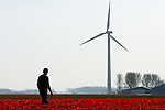 Jaap van der Beek walks amongst his fields of tulips in Middenmeer, the Netherlands..Jaap van der Beek, pilot, wind farmer and farmer in Middenmeer, Holland. Mr. van der Beek owns one windmill on his property. Sensitive to recent decisions to try and group wind mills together from a government level, van der Beek is currently working with other wind mill owners in North Holland to secure a location for a collection of windmills. Until that time, van der Beek will continue to fly his plane and farm his tulips as the windmill powers him and hundreds of other homes.