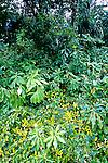 Vegetaçao da Floresta Amazônica no Amapá. Foto de Juca Martins.
