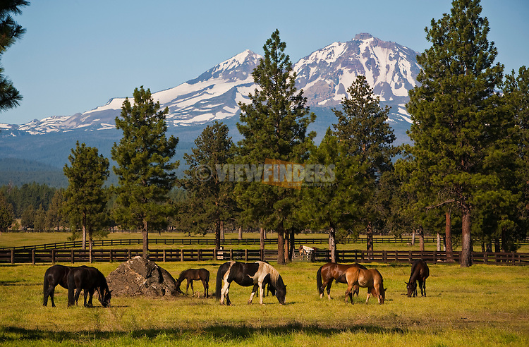 Horses Grazing near Three Sisters Mountains, Oregon