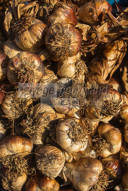 France, Nord (59), Bergues: Jour de marché, Ail fumé d'Arleux //  France, Nord, Bergues:  Market Day, Arleux smoked garlic,
