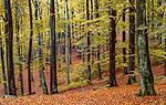 Fall landscape, Helsingborg region, Sweden