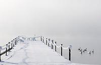 Germany, Bavaria, Upper Bavaria, Winter in Werdenfelser Land: winter scenery at Kochel Lake - swans