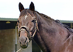 Kentucky Thoroughbreds in Kentucky, 1977 - 1984