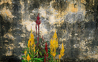 Wall colours and flowers create an interesting pattern, Battambang, Cambodia