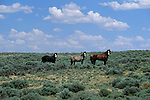 Three wild horses stand amidst sagebrush on the Red Desert in Wyoming.
