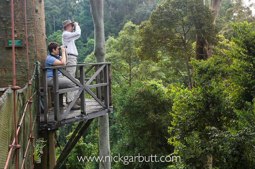 Tourists bird and wildlife watching from canopy walkway. Danum Valley Sabah Borneo. & Tourists on canopy walkway Danum Valley | Nick Garbutt