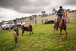 Cowboys at the Dell'Orto pasture near Sunnybrook, Calif. spring cattle marking and branding..Mattley Dell'Orto and Kate Brooks