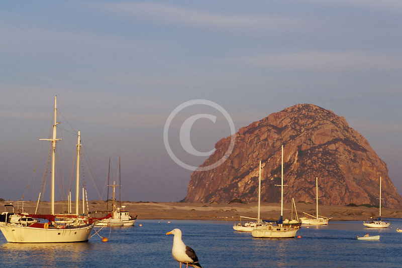 California, San Luis Obispo County, Fishing boats and Morro Rock, Morro Bay