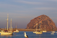 California, San Luis Obispo County, Fishing boats and Morro Rock, Morro Bay