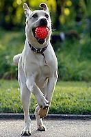 Animais. Mamiferos. Cães. Cachorro. Foto de Caetano Barreira.