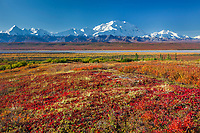 Denali, mt foraker and mt Brooks visible along the Alaska Range with the Mckinley River Bar in the foreground. autumn tundra blazes in late august, Denali National Park, Alaska.