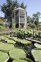 Uno scorcio dell'orto botanico di Padova.<br /> A view of the botanical garden of Padua.<br /> UPDATE IMAGES PRESS/Riccardo De Luca
